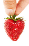 hand som rymmer den mogna jordgubben Arkivbilder