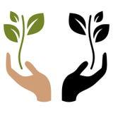 Hand som rymmer den unga växten Arkivbilder