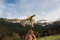 Hand som rymmer den vita blomman med berget och himmel som bakgrund på en klar dag royaltyfri bild