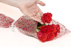 Hand som rymmer en bukett av rosor på en vit bakgrund royaltyfria bilder
