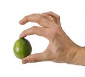 Hand som rymmer en enkel limefrukt arkivfoton