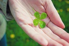 Hand som rymmer en växt av släktet Trifolium för fyra blad Fotografering för Bildbyråer