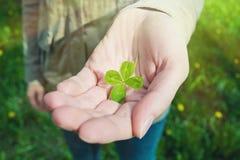 Hand som rymmer en växt av släktet Trifolium för fyra blad Arkivbild