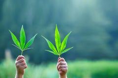 Hand som rymmer ett blad av marijuana royaltyfri foto