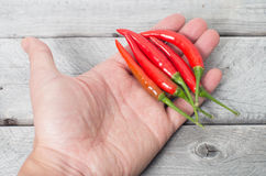 Hand som rymmer glödheta chilipeppar Royaltyfri Fotografi