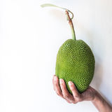 Hand som rymmer liten stålarfrukt Royaltyfri Foto
