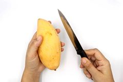 Hand som rymmer mogna mango, gul mango med kniven för att förbereda sig att skala isolerat på svart bakgrund royaltyfri bild