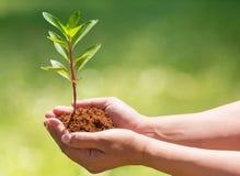 Hand som rymmer och planterar det nya trädet Royaltyfria Bilder