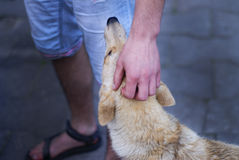Hand som slår hunden royaltyfria foton