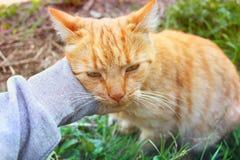 Hand som sl?r en katt royaltyfria bilder