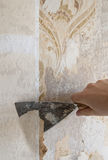 hand som tar bort väggwallpaperen Arkivfoto