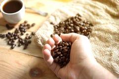 Hand som tar kaffebönor arkivbild