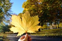 Hand som upp rymmer ett gult blad arkivbilder