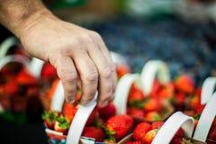 Hand som upp väljer en jordgubbekorg royaltyfri foto