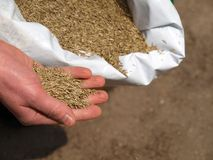 Hand sowing grass, closeup Stock Photo