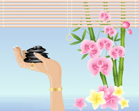 Hand with spa pebbles. An illustration of a hand holding black spa pebbles with bamboo orchids and frangipani flowers in shallow fresh water with raffia blind Royalty Free Stock Image