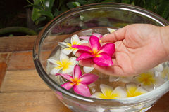 Hand spa with  plumeria flower Stock Photo