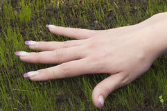 Hand on sprouts. Female hand on green grass Royalty Free Stock Images