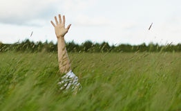 Hand sticks out of high grass Stock Image