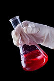 Hand stirring and shaking red liquid in Erlenmayer flask Royalty Free Stock Photography