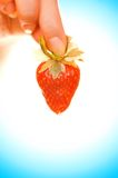 Hand with a strawberry Royalty Free Stock Photo