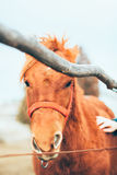 Hand stroking a beautiful horse Royalty Free Stock Photos