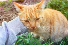 Hand stroking a cat royalty free stock images