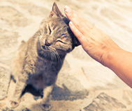 Hand stroking cat Royalty Free Stock Image