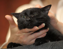 Stroking a black cat Stock Photography
