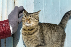 Hand stroking a cat .Love animals Stock Photos