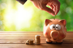 Hand stuffing money into piggy bank with nature background Stock Photography