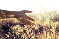 Hand in the sun Stock Images