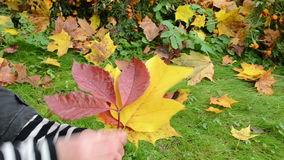 Hand take show pick various form beautiful autumn tree leaf stock video footage