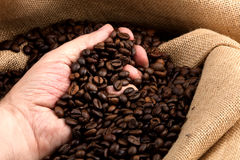 Hand taken toasted coffee beans Stock Image