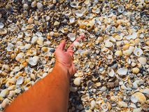 The hand takes the shells on the beach royalty free stock photo