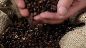 Hand taking coffee beans from burlap sack stock video footage