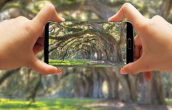 Hand taking photo of landscape Royalty Free Stock Images
