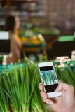 Hand taking a photo of scallions in display in organic section Royalty Free Stock Images