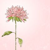 Hand tecknad blomma Fotografering för Bildbyråer