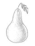 Hand tecknad pear Royaltyfri Foto