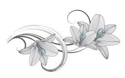Hand-teckning blom- bakgrund med blommaliljan också vektor för coreldrawillustration royaltyfri fotografi