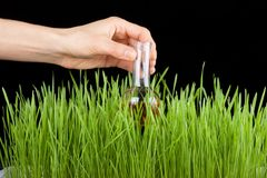Hand with a test tube and grass. Fertilizer Royalty Free Stock Images