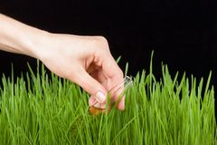 Hand with a test tube and grass. Fertilizer Royalty Free Stock Photography