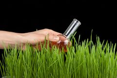Hand with a test tube and grass. Fertilizer Royalty Free Stock Image