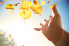 Hand throwing autumn leaves in the sky. Autumn background Royalty Free Stock Photography