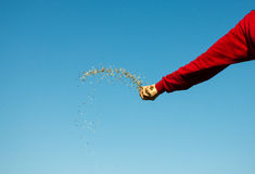 Hand Throwing Seeds Royalty Free Stock Photography