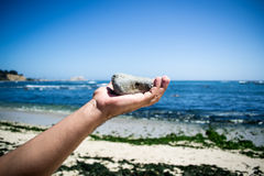 Hand throwing a stone. In the air with beach as background Royalty Free Stock Image