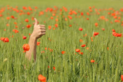 Hand with thumbs up in the middle of a meadow Stock Photo