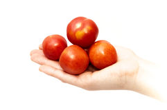Hand with tomatoes Stock Images