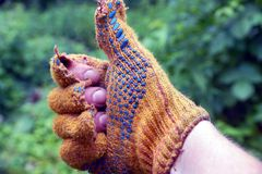 A hand in a torn glove in approval Royalty Free Stock Photo